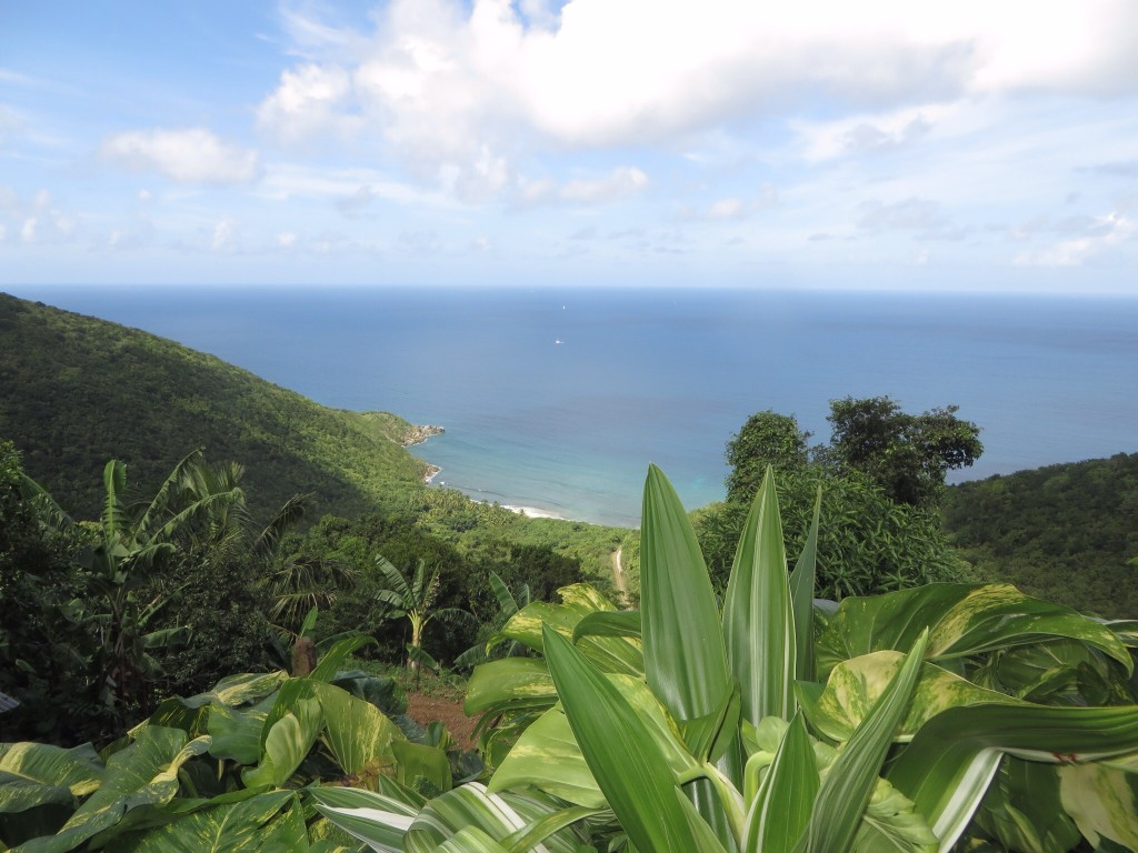 Tortola - organic farm
