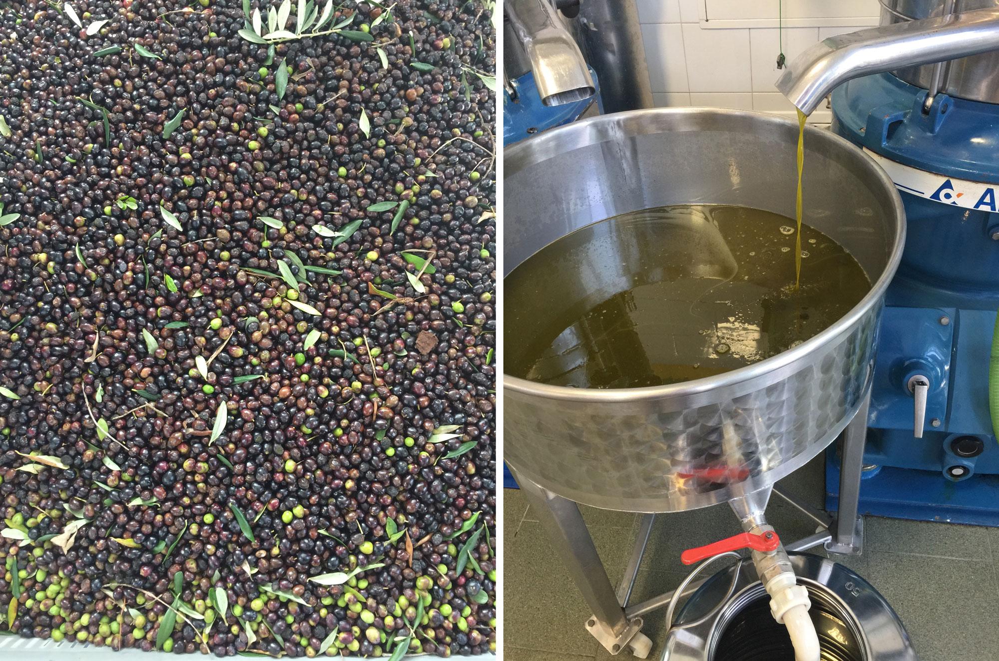 Olive Oil Tasting Puglia